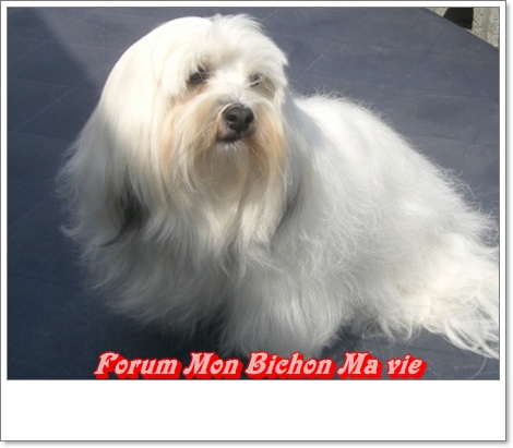 Album photos des bichons Frimou10