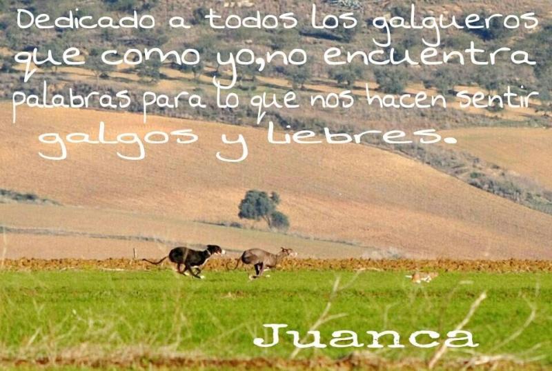 Juan Carlos et ses galgos 10369110