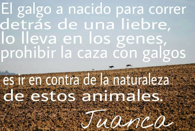 Juan Carlos et ses galgos 10417810