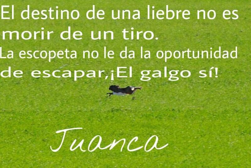 Juan Carlos et ses galgos 16234110