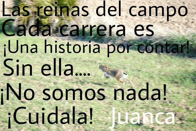 Juan Carlos et ses galgos 16563910