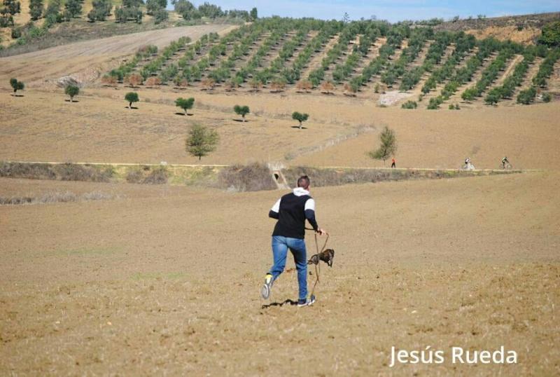 Juan Carlos et ses galgos Jour_d13