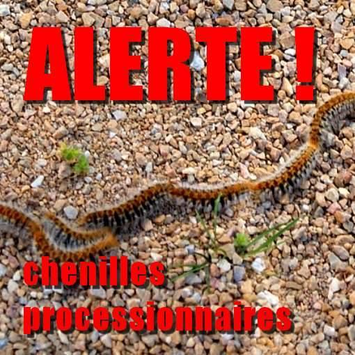 LES CHENILLES PROCESSIONNAIRES: REELLE URGENCE VETERINAIRE 10425410