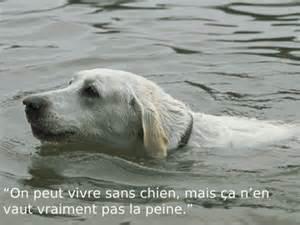 citations sur le chien - Page 3 129