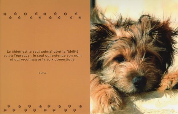 citations sur le chien - Page 3 1313