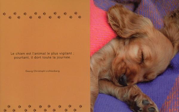 citations sur le chien - Page 3 1612