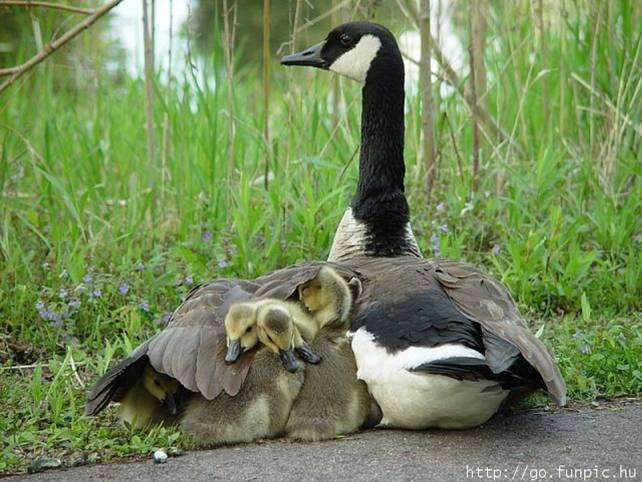 Les mamans et leur bébé 4o7rgo10