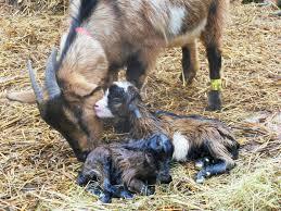 Les mamans et leur bébé 512