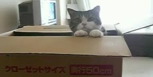 D'où vient la passion des chats pour les boîtes ? La réponse des scientifiques Chat_c10