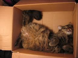 D'où vient la passion des chats pour les boîtes ? La réponse des scientifiques Chat_c11
