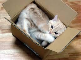 D'où vient la passion des chats pour les boîtes ? La réponse des scientifiques Chat_c12