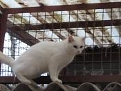 Les chats parrainés Chimen11