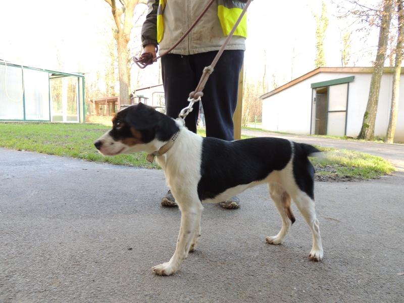 CHANEL x Beagle Dimanc22