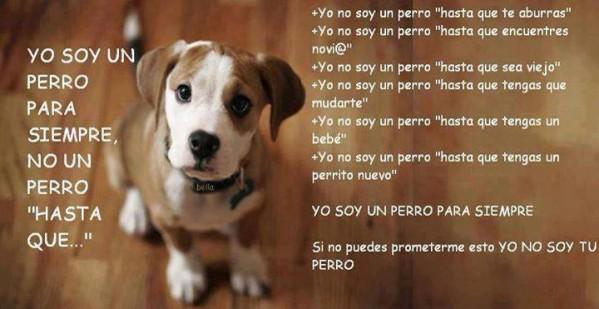 Message de chien Perro510