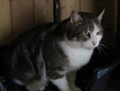 Les chats parrainés Tigrou12