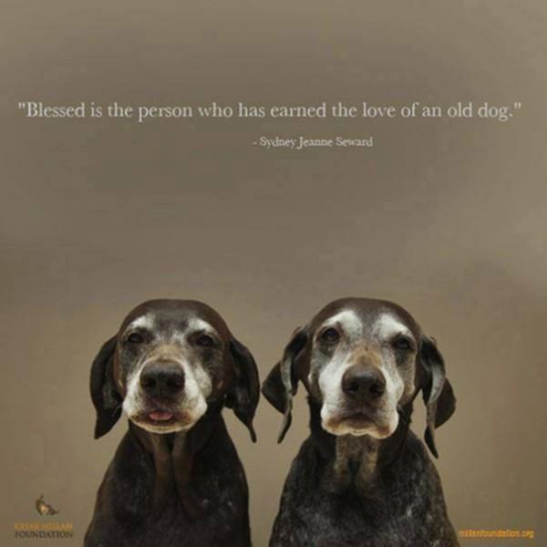 Adopter un vieux chien. Vieux-10