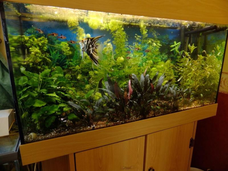 Un aquarium sans substrat nutritif  200_l_10