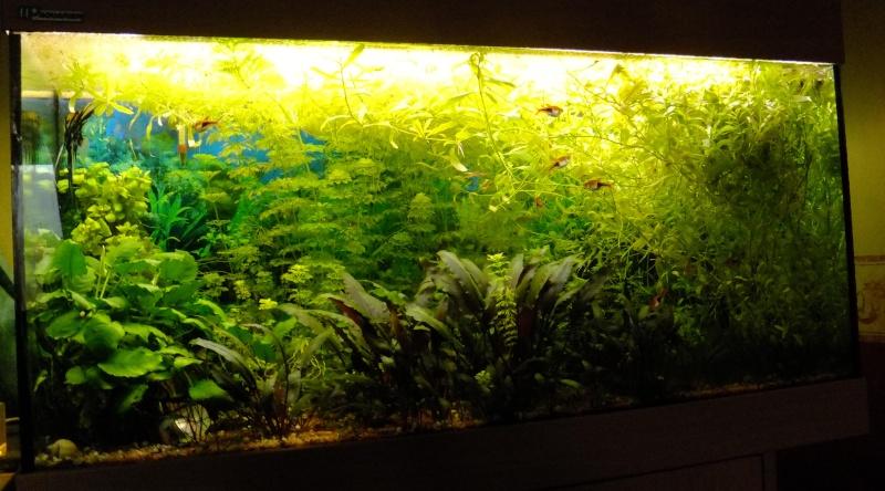 Un aquarium sans substrat nutritif  200l_110