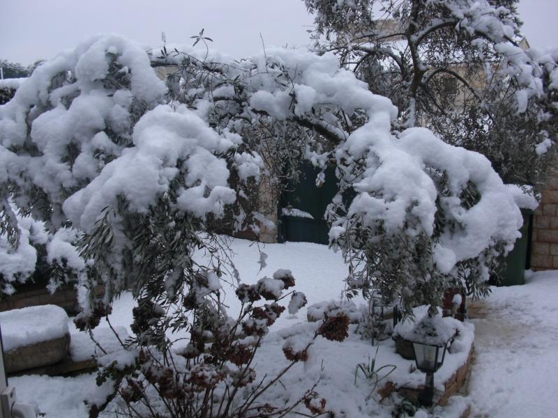 Neige en Provence Cimg5310