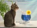 (De)Motivational Poster et Dialogues de Bêtes - Page 19 Badday10