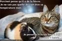 (De)Motivational Poster et Dialogues de Bêtes - Page 19 Porcin10