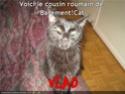 (De)Motivational Poster et Dialogues de Bêtes - Page 19 Vlad10