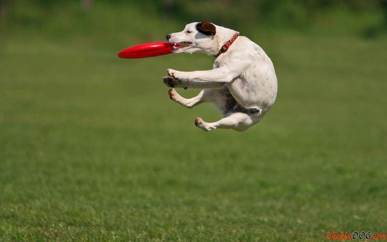 Frisbee fun 10110310
