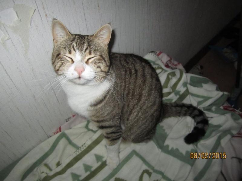 MINOU jeune  chat de 2 ans IE 10965311
