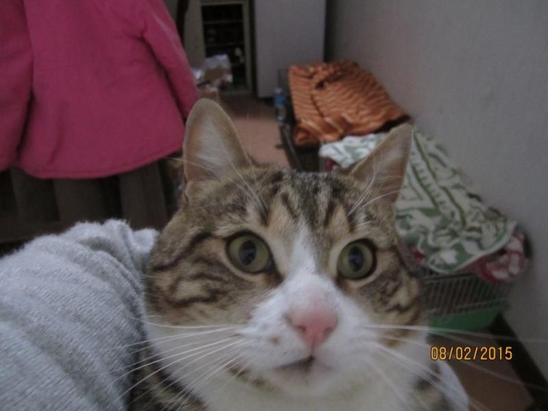 MINOU jeune  chat de 2 ans IE 10965410