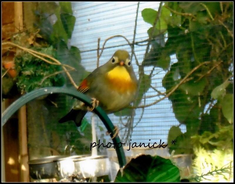 les oiseaux de Janick Dsc00610