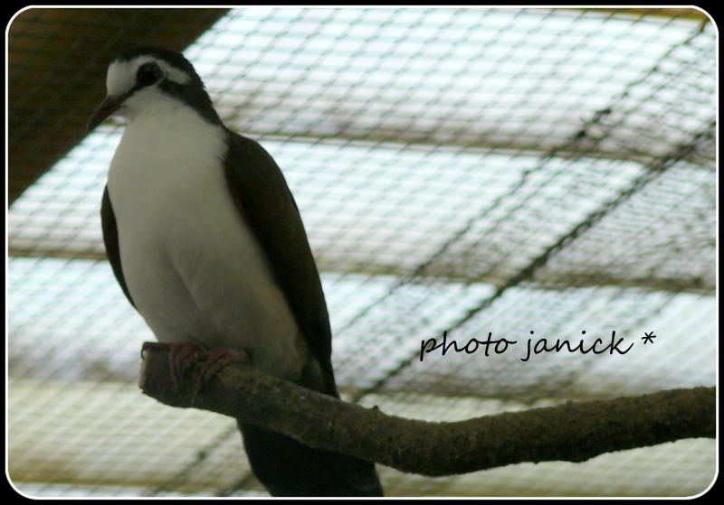 les oiseaux de Janick P1220810
