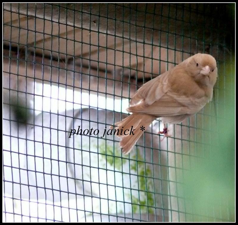 les oiseaux de Janick P1220910