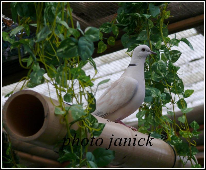 les oiseaux de Janick P1230010