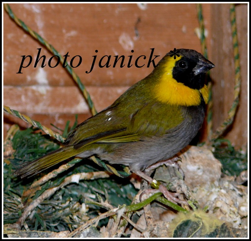 les oiseaux de Janick P1230011
