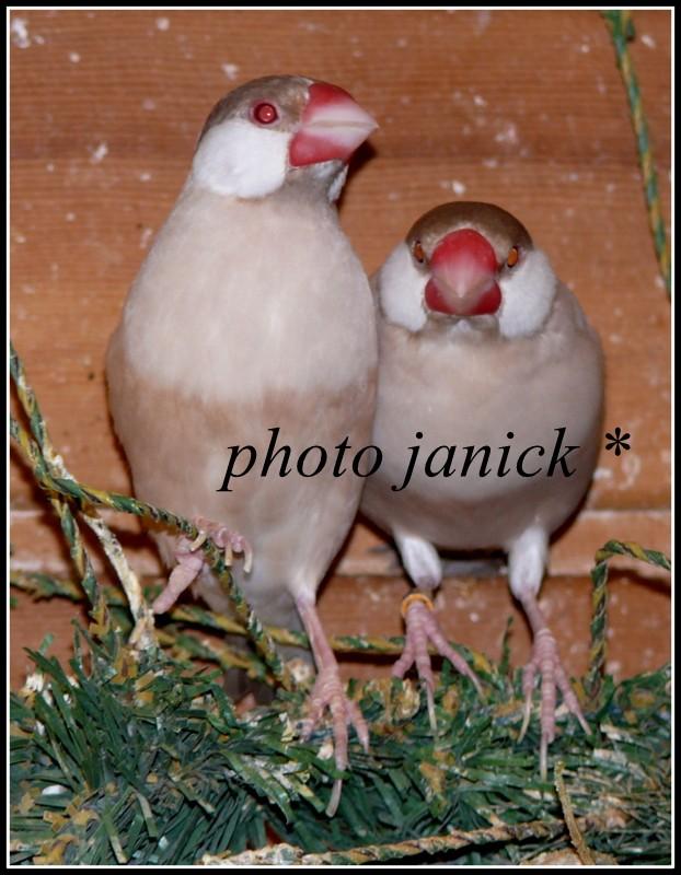 les oiseaux de Janick P1230013