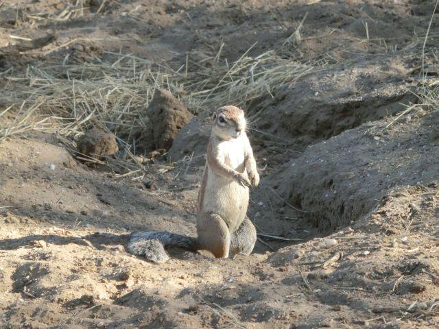 Urlaub in Namibia 0910