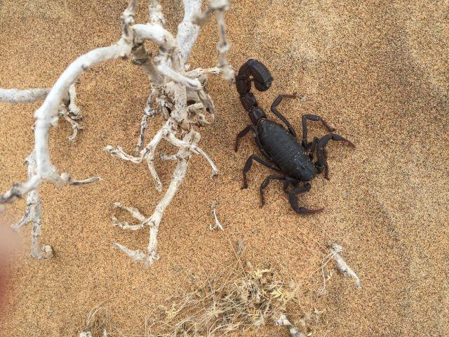 Urlaub in Namibia 1c10