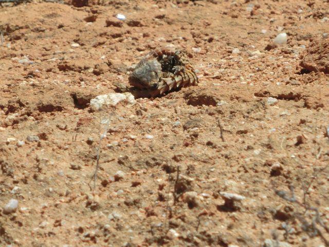 Urlaub in Namibia - Seite 3 2210