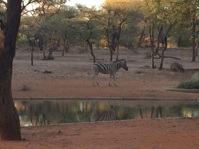 Urlaub in Namibia 2b10