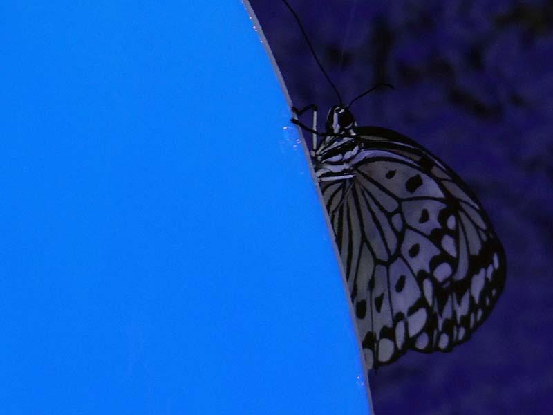 Papillons en liberté... Dsc02213