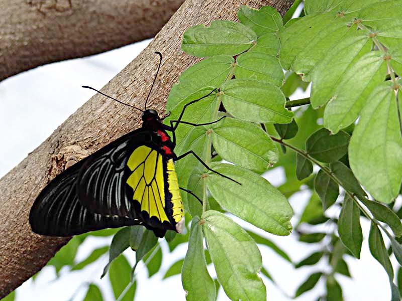 Papillons en liberté... Dsc02214