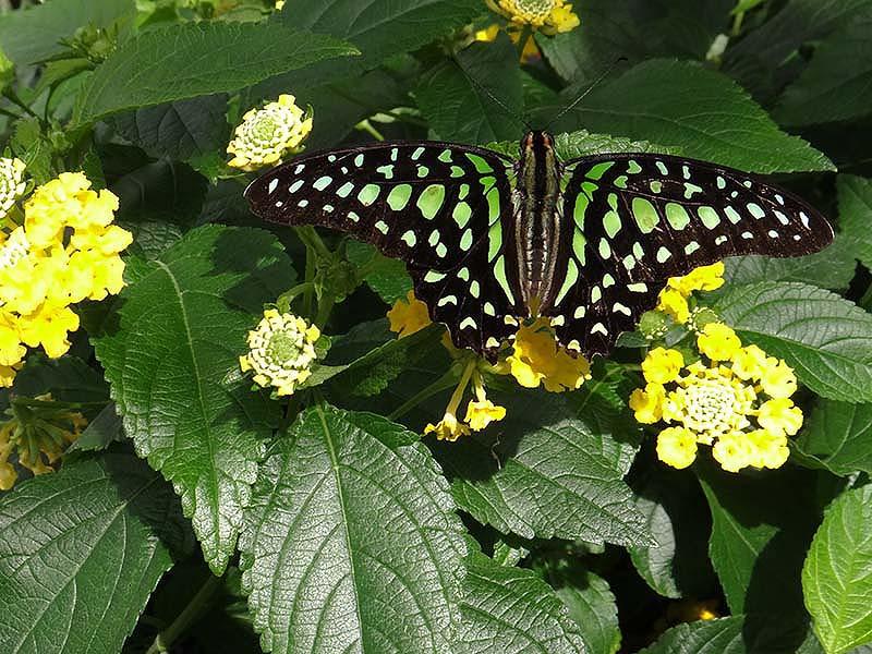 Papillons en liberté... Dsc02310