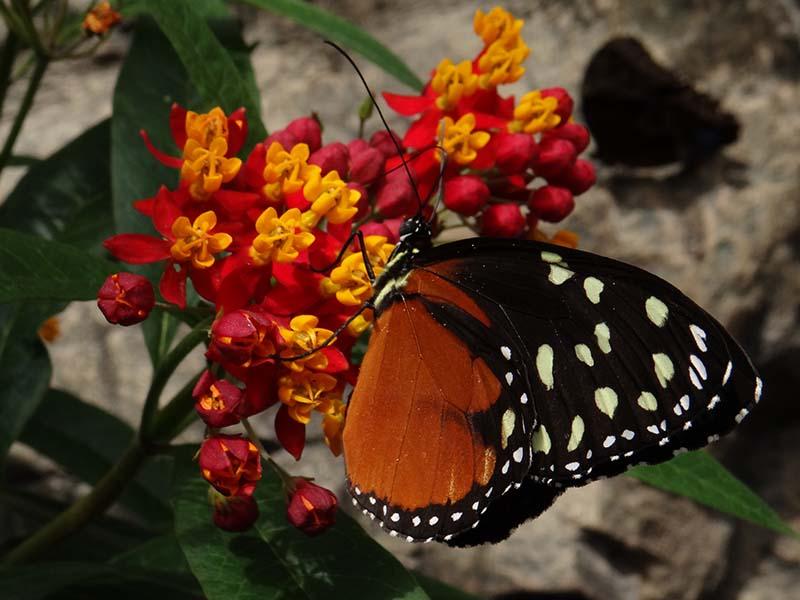 Papillons en liberté... Dsc02311