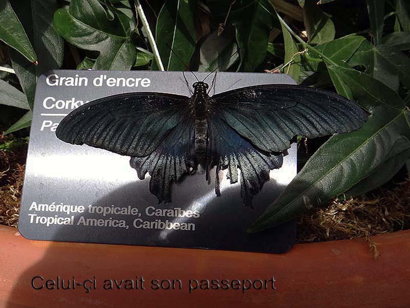 Papillons en liberté... Dsc02313