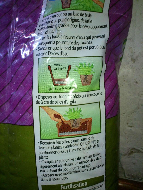 Sarracenia desséchée ?! Dsc_1812
