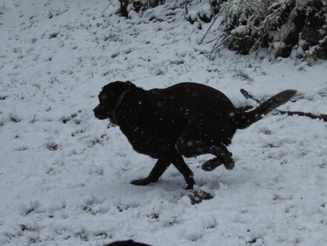 Il neige! Img_5819
