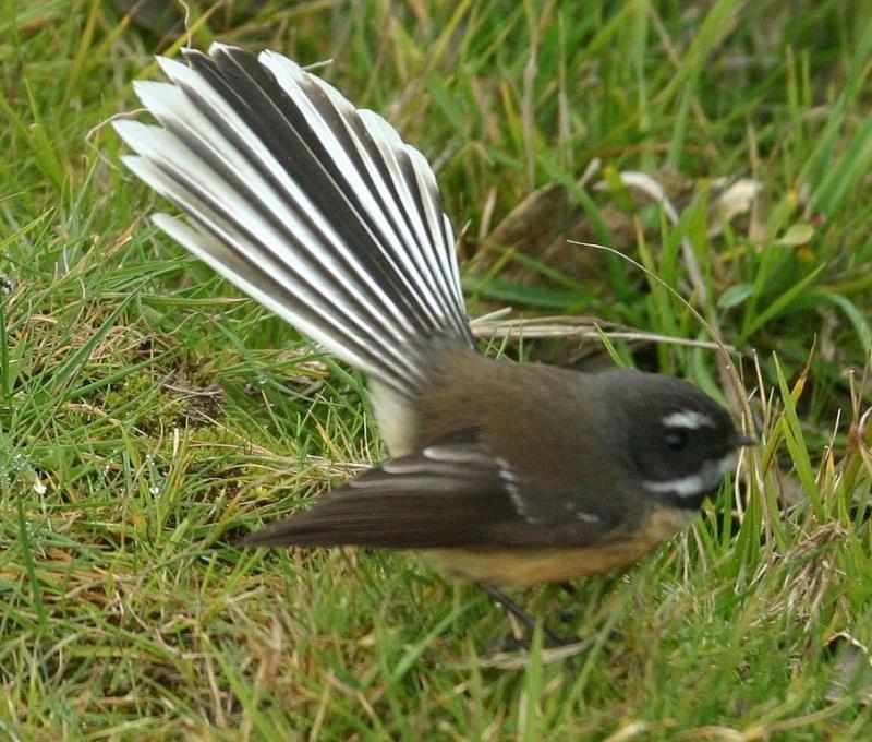 un petit oiseau - ajonc- 7 mars trouvé par Martine 903px-10
