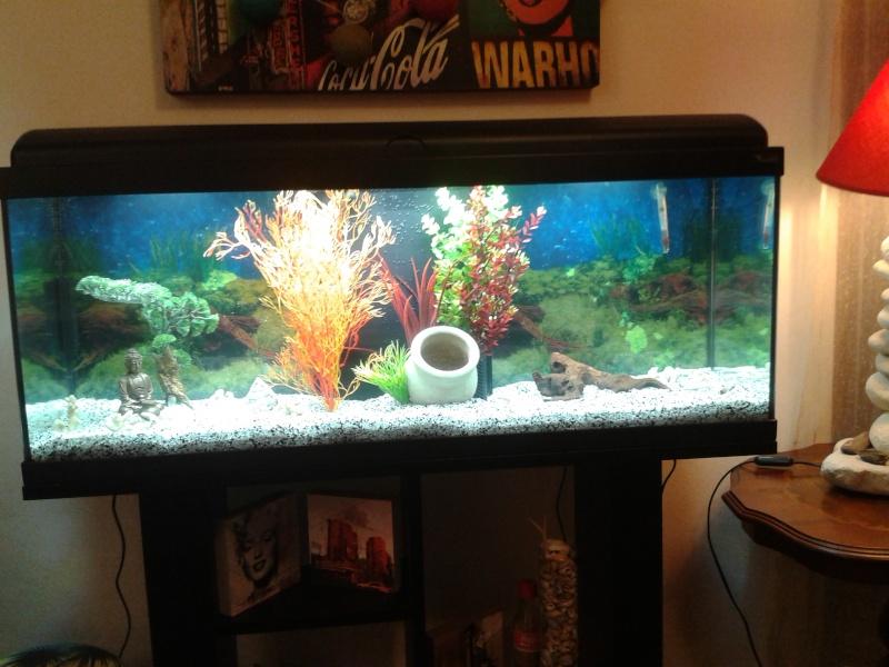 Nouveau aquarium de 120l 2015-012