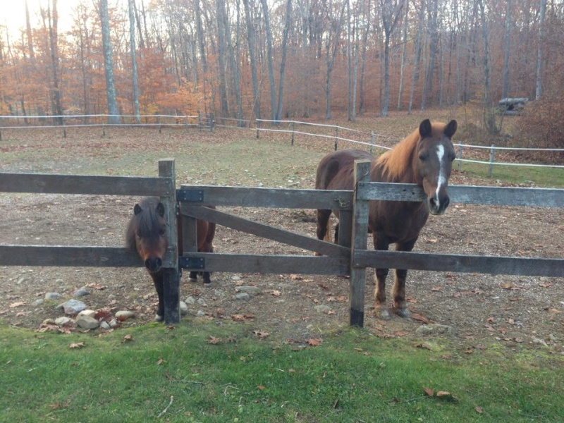 Pictures Of My Horses 10592610