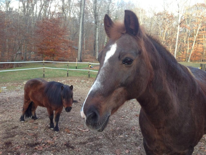 Pictures Of My Horses 10613110